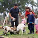 La prima fattoria didattica della Corsica di 1,7 ettari A Tinuta con 35 animali ha bisogno di un piccolo aiuto