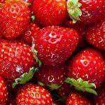 Un calo del 10-15% della produzione di fragole a causa delle piogge