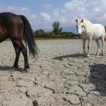 Riconosciuta la calamità agricola in Corsica per la siccità dell'estate del 2017