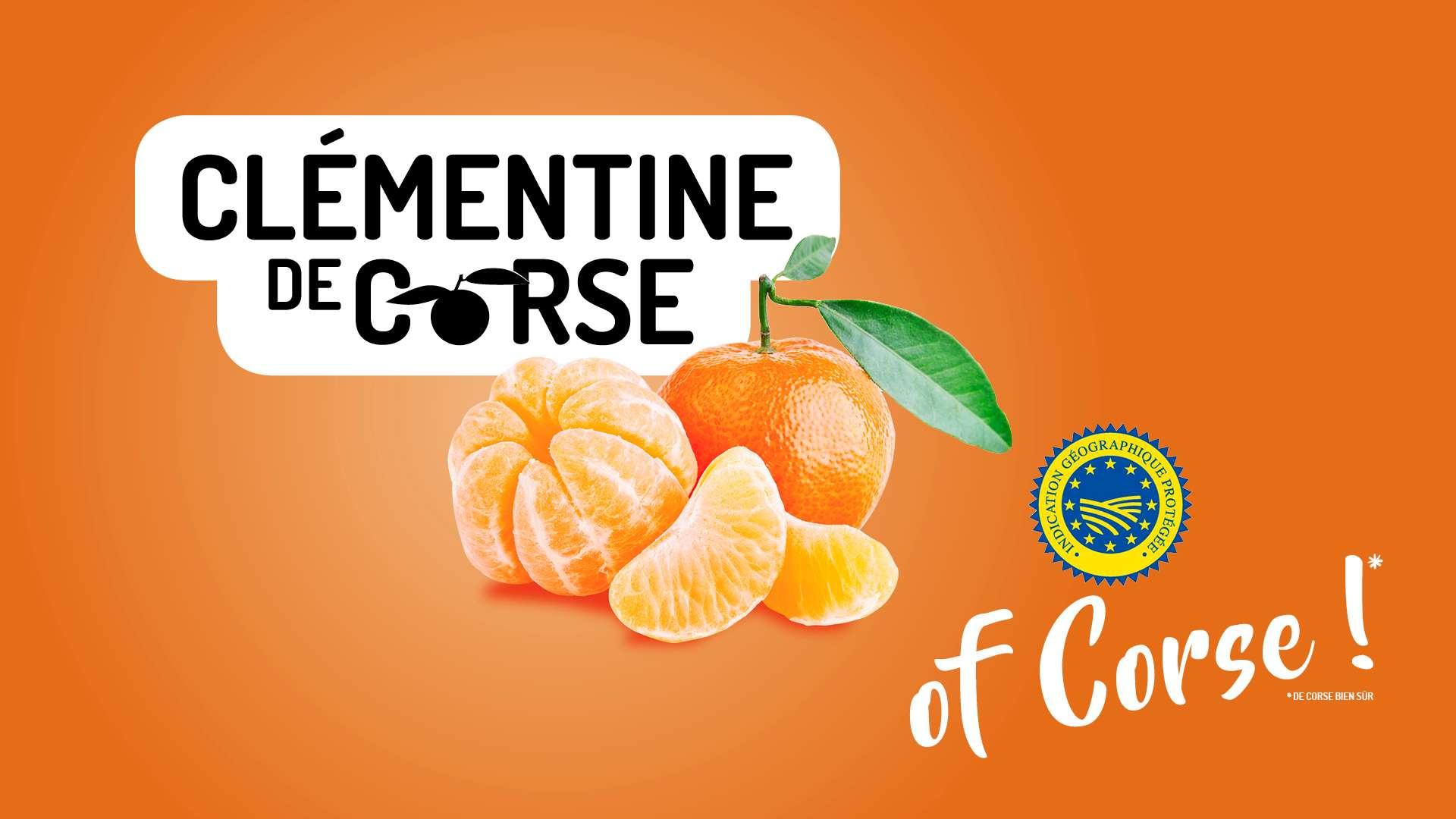 Il successo della clementina còrsa può aiutare anche gli agricoltori italiani?
